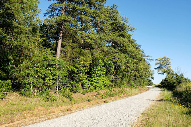 Barr Chapel Road, A Well Maintained County Gravel Road, Provides Access To The Tract.