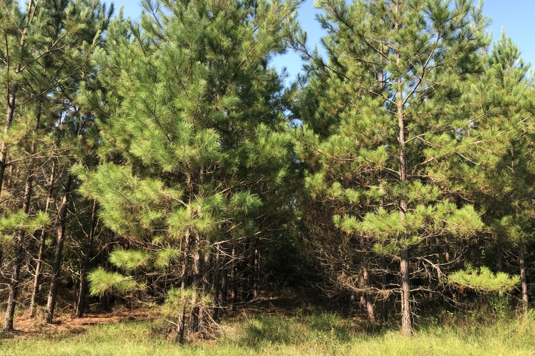 High Point Pinelands Features Outstanding Timberland Featuring Premerchantable Pine Plantations And Mature Hardwood Bottom Lands.