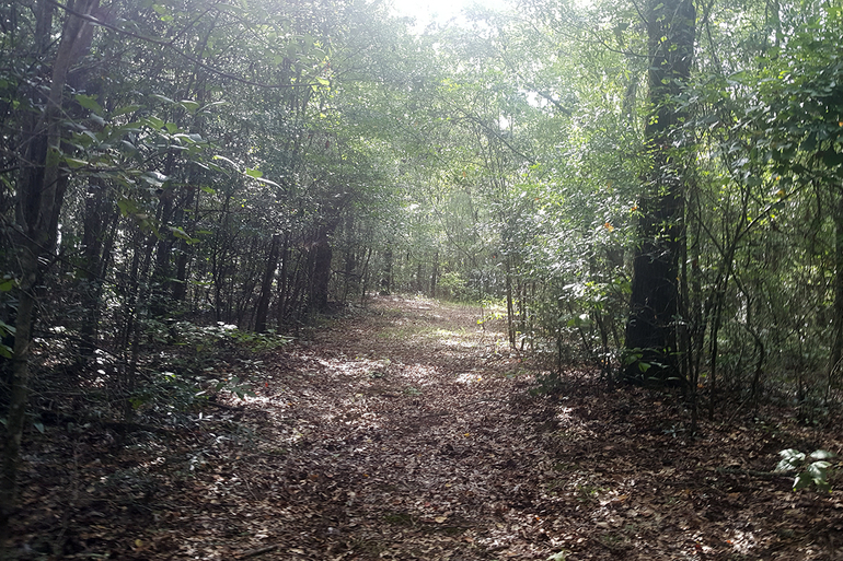 An Atv Trail Running Through The Property.