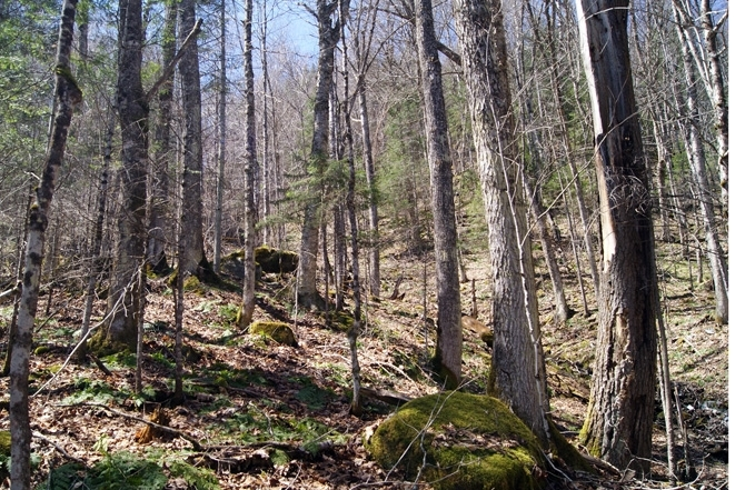 A Northern Hardwood Forest Exists On The Upland Side