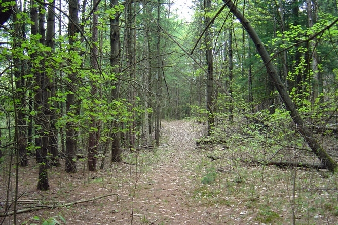 Hiking Trails For Weekend Walks
