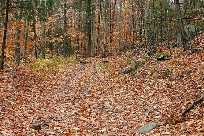 Forestry Trail Leading Toward Property