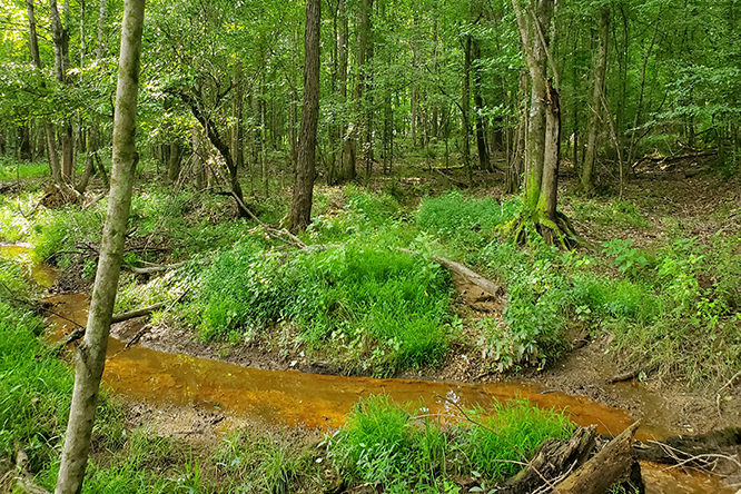 A Creek Running Through The Natural Timber Stand.