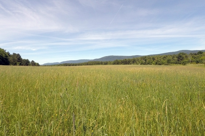 Long View Of Meadow