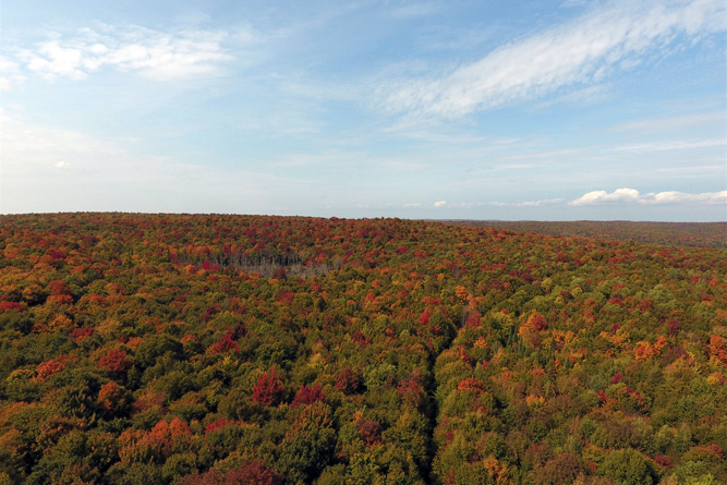 271 Acres For Sale Near Malone, Ny