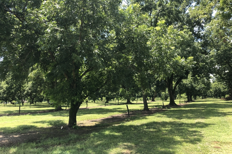 Miami Valley Orchards Features A Mix Of Mature And Young, Irrigated Pecan Orchards.
