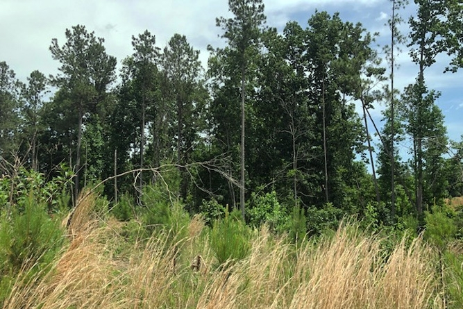 Hardwood Stands, Providing Wildlife Cover