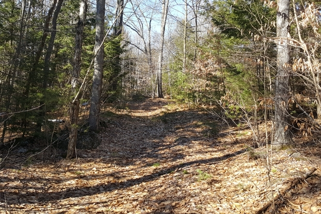 The Forest Offers A Loop Trail For Recreation And Forestry