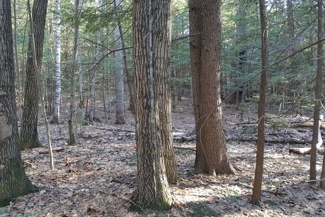 Woodlot Management Opportunities Exist