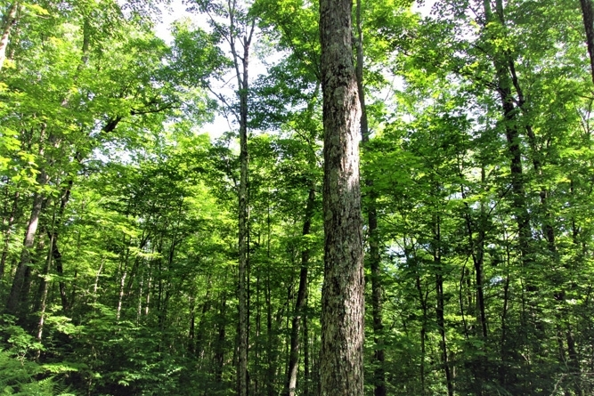Adirondack Timber Land For Sale