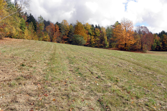 Looking Toward Forested Acres From Potential Building Site