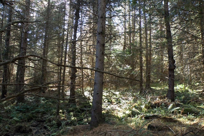 Common Forest Conditions