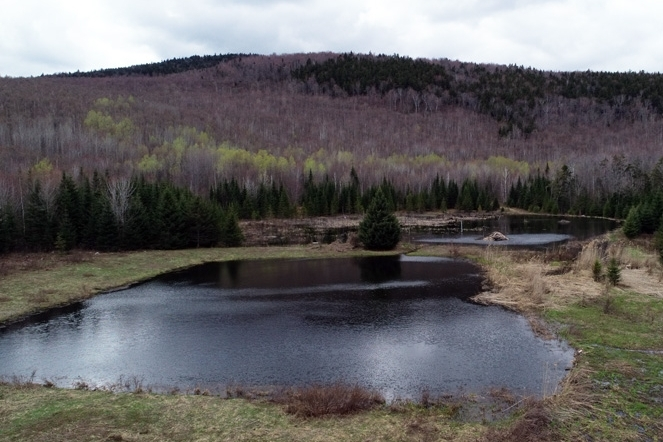 Upper Pond With Adjacent Beaver Pond