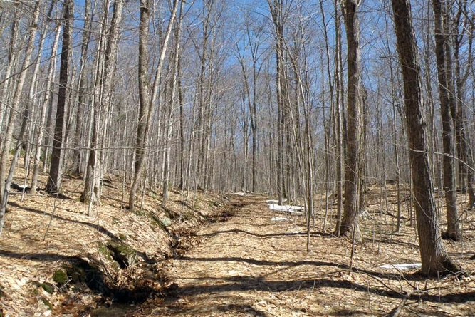 Woods Trail At Property Center