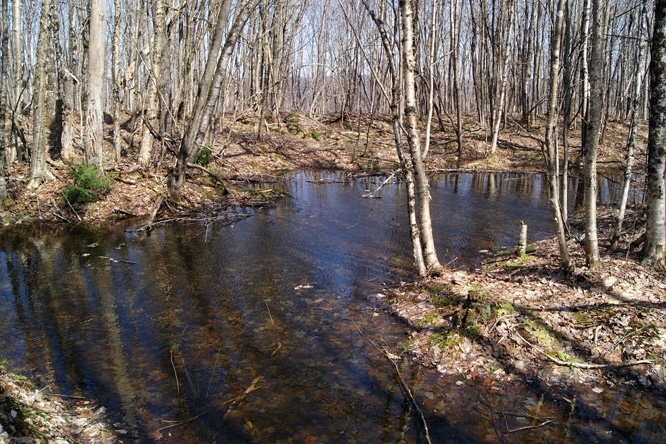 Vernal Pools Form From The Early Spring Snow Melt