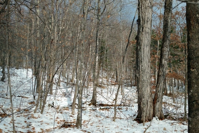 Adirondack Land For Sale