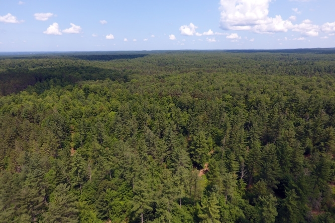 Looking Across The Property's Dense Forest Canopy
