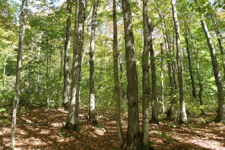 Solid Sugarbush Potential