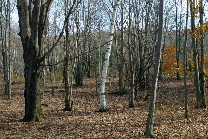 Recreational Land With Hardwood Forest