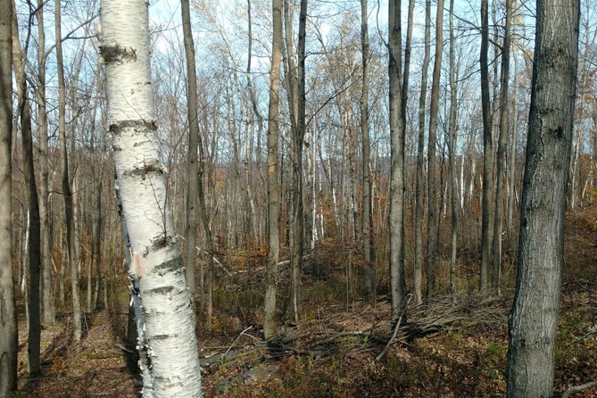 Northern Hardwood Forest