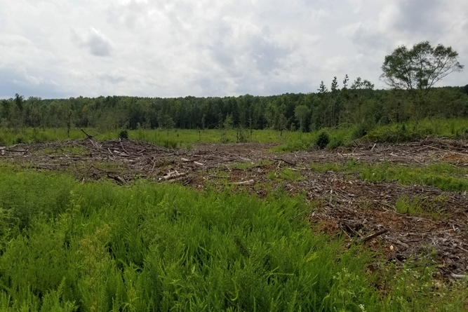 View Across Middle Clearcut Area