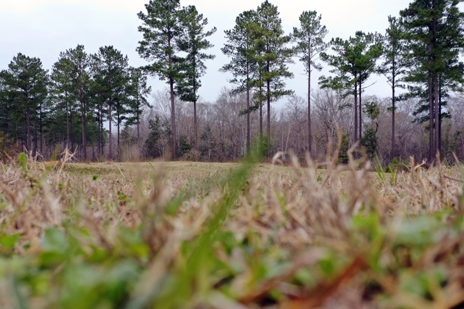 Timber, Pasture And Wildlife Habitat