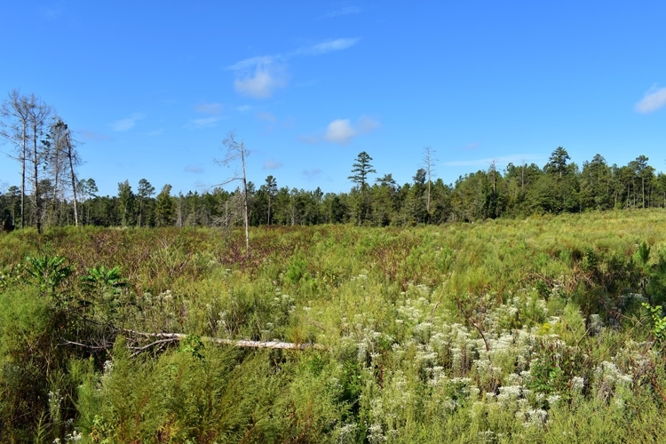 60+ Acres Of Timberland With Loads Of Potential