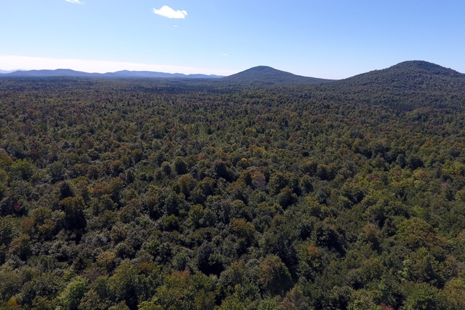 Thousands Of Acres Of Adjacent Conserved Forest