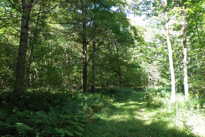 Access Road To The Camp And Woodland Winds Through The Forest