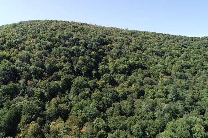 Drone View Of Sugar Hollow Pond Forest Canopy