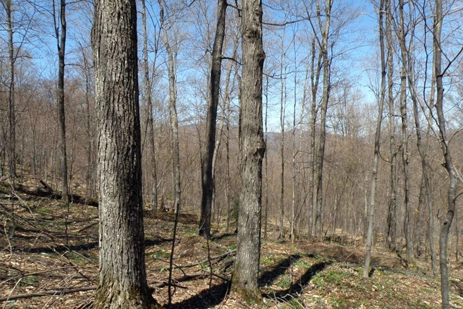 Well-Stocked Northern Hardwood Stands