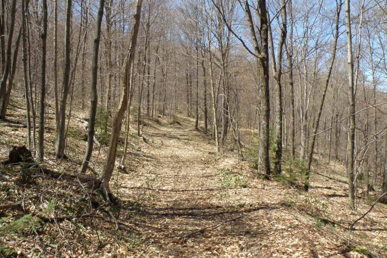 Existing Recreational And Forestry Trails