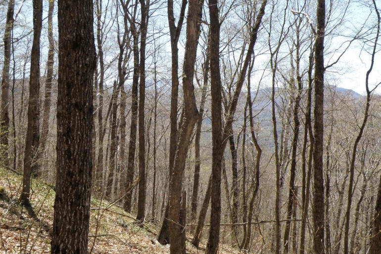 Upper Elevation Hardwood Stands On Tweed Tract Slopes