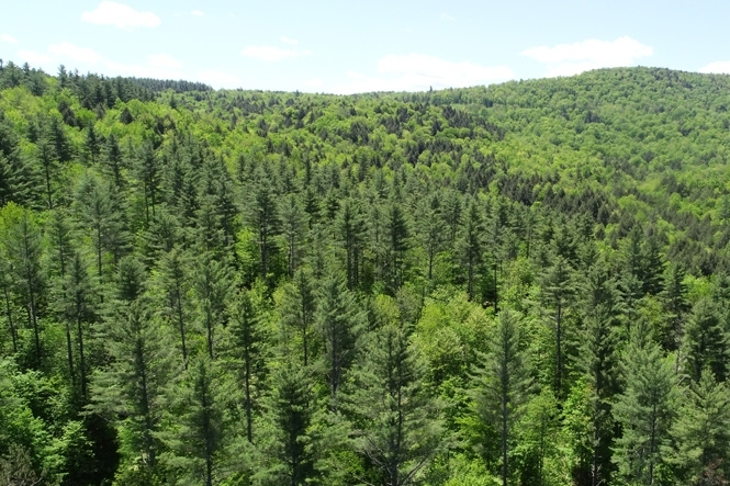 Looking South; Pines On Lower Slopes With Hardwoods Higher Up