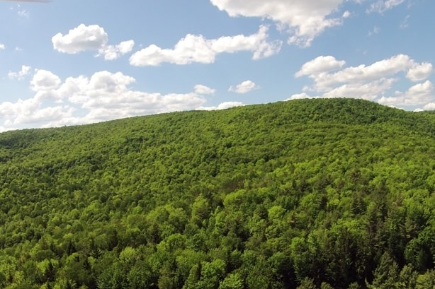 Extensive Forested Acreage