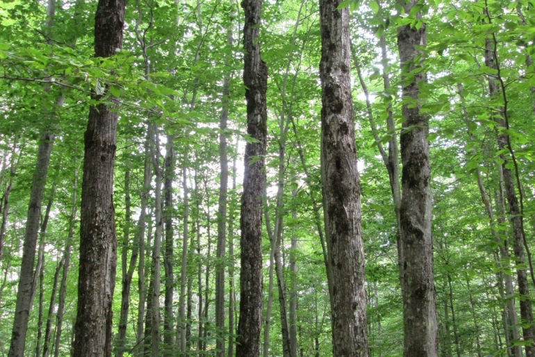 Productive Northern Hardwood Growing Sites